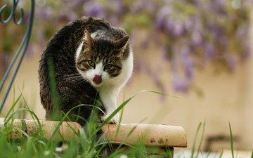кот, киса