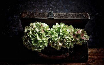 цветы, винтаж, чемодан, гортензия, букеты
