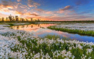 the sky, water, lake, nature, sunset, russia, pavel evgrafov, as cotton grass, yamal
