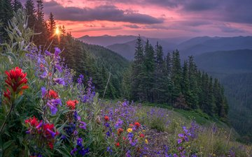 flowers, mountains, forest, sunset