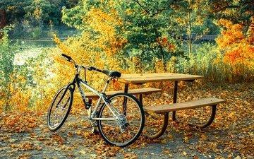 природа, берег, листья, настроение, парк, ветки, осень, стол, скамейки, пруд, отдых, желтые, листопад, велосипед, уют, велик