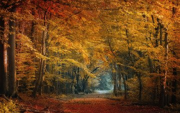 trees, nature, forest, leaves, autumn