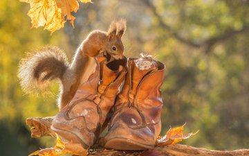 leaves, animals, autumn, mouse, protein, shoes, rodents