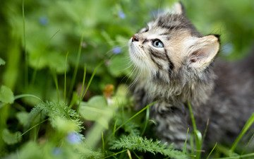 трава, мордочка, взгляд, котенок, малыш
