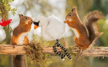 branch, tree, animals, toy, bird, berries, rowan, proteins, rosary, rodents