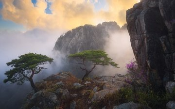 flowers, clouds, trees, mountains, rocks, fog, bush