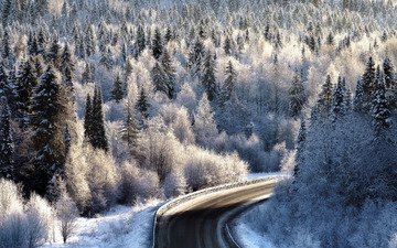 road, forest, winter, frost