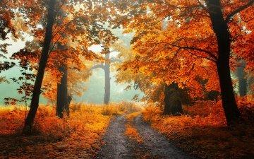 свет, дорога, трава, деревья, природа, лес, листья, настроение, пейзаж, парк, туман, ветки, ветви, стволы, листва, осень