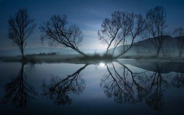 light, night, trees