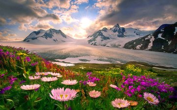 flowers, mountains, snow