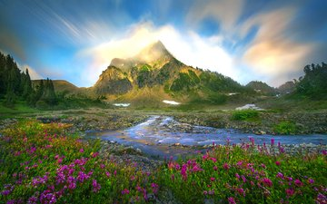 flowers, stream, mountain