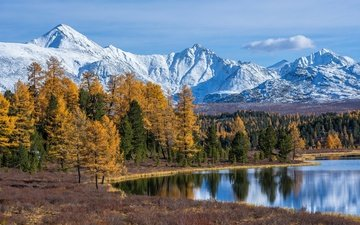 trees, lake, mountains, forest, autumn, russia, the altai mountains, lake cicely
