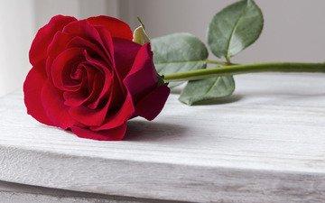 roses, rose, bud, romantic, red, red rose, wood, beautiful