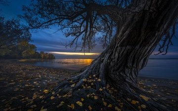 night, tree, shore, leaves