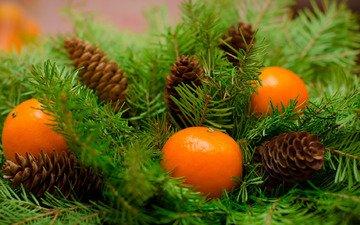 новый год, украшения, плоды, рождество, мандарины, дерева, мандаринка, merry, fir tree, ветки ели, mandarines