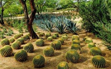 trees, the bushes, usa, ca, cacti, ranch, rancho mirage, sunnylands