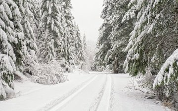 road, trees, snow, forest, winter, ate, washington, national forest olympic