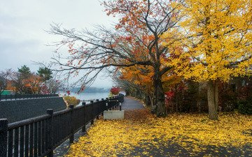 trees, leaves, park, autumn, path, street, landscape, fall, colorful, tree