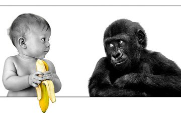 child, monkey, banana