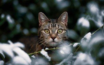 зима, кот, кошка, взгляд, боке