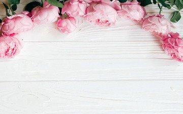 цветы, розы, розовые, дерева
