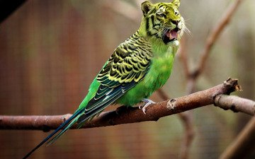 tiger, nature, creative, parrot, super, i, caught