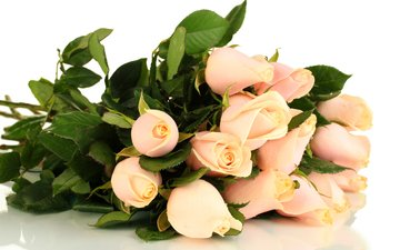 flowers, buds, roses, bouquet, pink