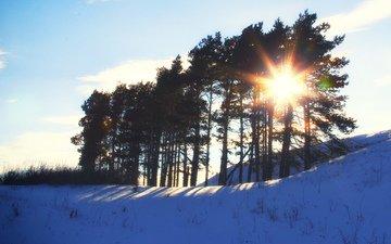 восход, солнце, природа, лес, зима