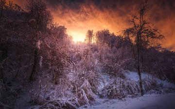forest, sunset, winter