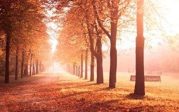 road, trees, fog, beautiful