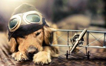 собака, шлемофон