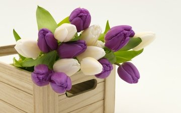 spring, bouquet, tulips, wooden, box