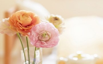 flowers, bouquet, gentle, ranunculus