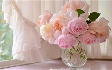 цветы, окно, ваза, штора, ранункулюс
