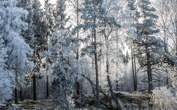 деревья, природа, лес, зима, пейзаж, мороз, иней, лодки