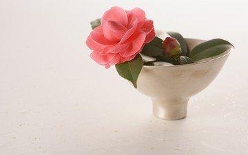 листья, цветок, лепестки, ваза, камелия