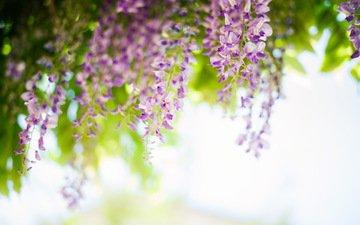 nature, tree, spring