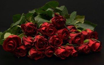buds, background, bouquet, dark, red roses