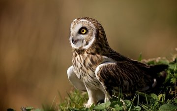 owl, pose, look