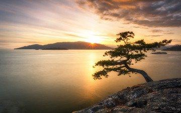 природа, дерево, берег, закат, море