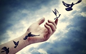 the sky, clouds, hand, pigeons