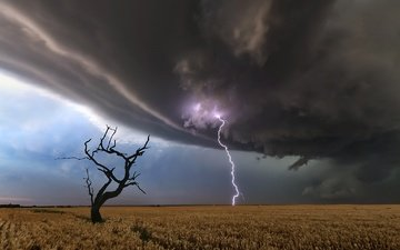 tree, lightning, field