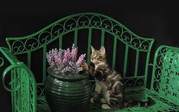 кот, кошка, лавочка, киса, коте, ваза с цветами