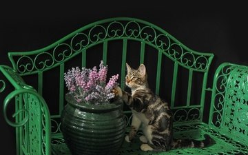 cat, shop, kitty, kota, vase with flowers