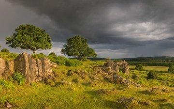 деревья, англия, холм, луга, beacon hill, гэмпшир, burghclere