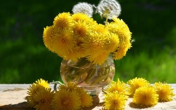 flowers, plants, macro, photo, summer, garden, russia, dandelion, dandelions, still life, etude