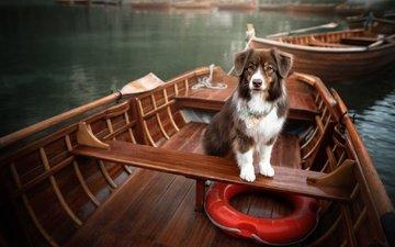 озеро, лодки, собака, спасательный круг