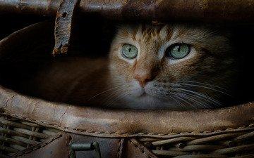 кот, мордочка, кошка, взгляд, корзина, рыжий, котейка