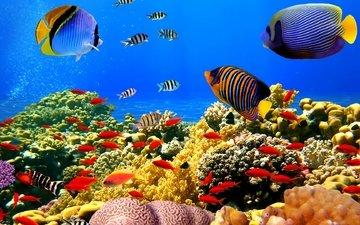 рыбы, океан, кораллы, риф, подводный мир, тропические