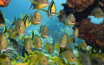 море, рыбки, кораллы, подводный мир, тропические рыбы
